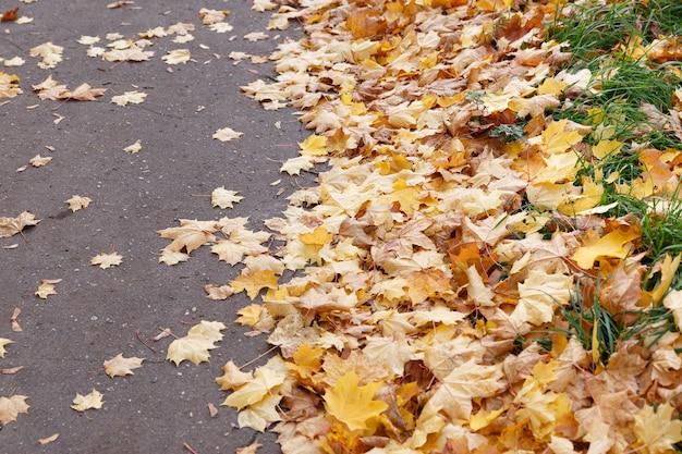舗装道路の脇は色とりどりのカエデの葉で覆われています