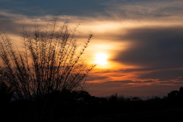 木の枝のシルエットは、美しい黄金色の夕焼けの輝きを放っていました。