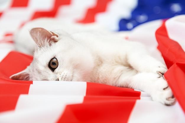 銀色のブリティッシュ猫はアメリカの国旗の上に横たわっています。愛国的な猫。アメリカのシンボル。独立記念日を待っています。
