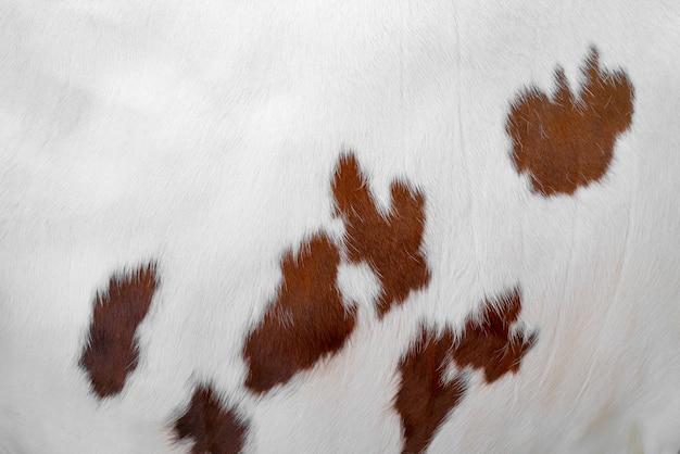 茶色の斑点のある白い牛の皮膚。動物の毛皮。自然な背景。暖かいふわふわの表面。