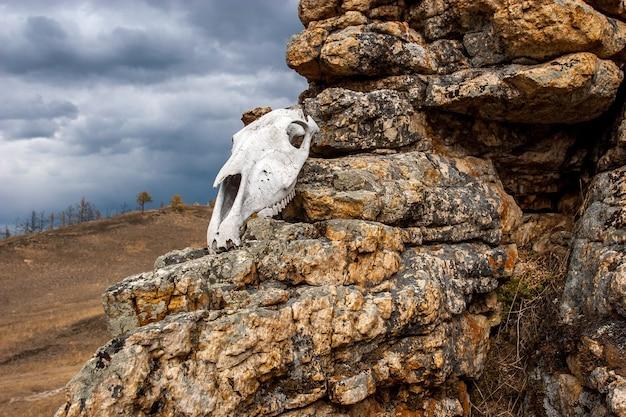Череп животного лежит на камнях