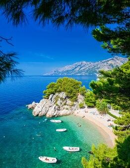 Небольшой красивый пляж подрасе в бреле среди сосен, макарская ривьера, хорватия