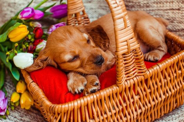 小さな犬は、花の近くのキュービーで眠っている