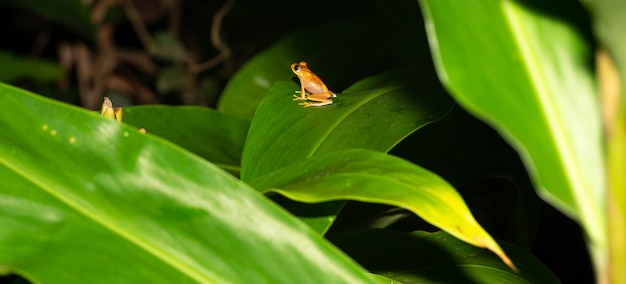 小さなオレンジ色のカエルが葉の上に座っています