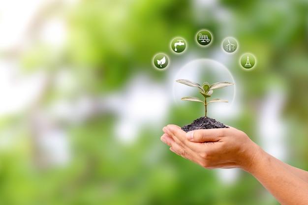 인간의 손에 있는 작은 나무와 에너지 아이콘, 에너지 절약 개념. 환경 보호
