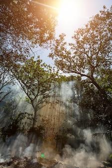 하늘의 정글 태양과 광선의 불에서 나오는 연기가 나무를 통과합니다.