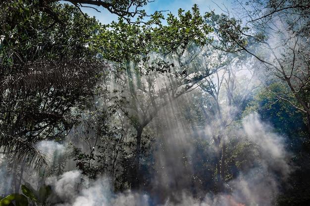 정글의 불에서 나오는 연기 태양 광선이 나무를 통과합니다.