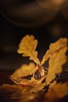 かたつむりが樫の木の枝を這う