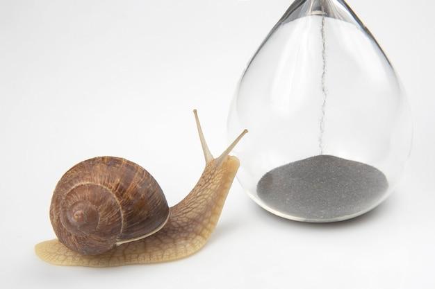 Улитка ползет по песочным часам. время и стабильность. скоротечность времени и медлительность в выборе успеха. цикличность жизни