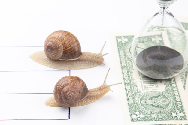 カタツムリはお金を受け取る権利のためにスピードで勝つために急いでいます。