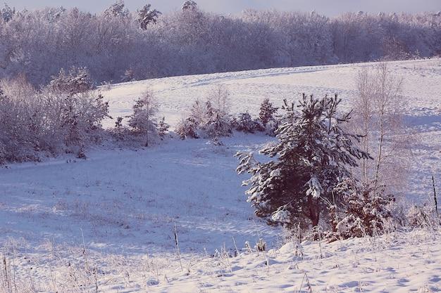 雪で覆われた森林