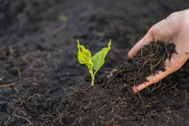 土は苗を植えている女性の手にあります。