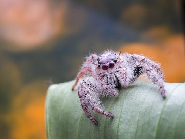 거미 bokeh 배경