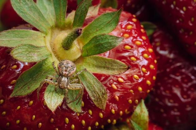 クモはイチゴの上にあります。マクロ写真