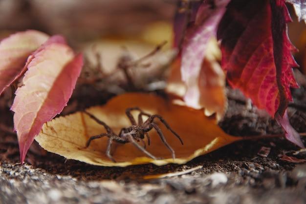 蜘蛛は木の上に座った。秋。