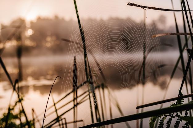 クモの巣は背景を閉じます。緑の草の背景の上のクモの巣に輝く水滴。