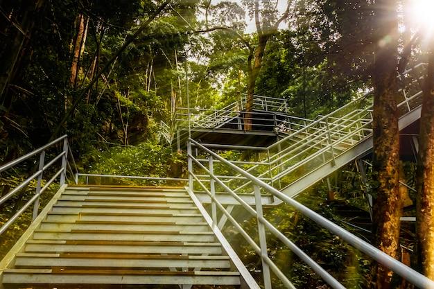 丘のトレイルと森、タイの頂上への階段。
