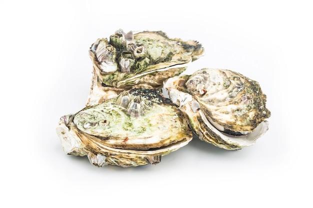 蒸した牡蠣は白い背中に置かれます