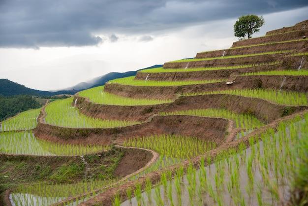 태국 북부의 언덕에서 농사를 짓는 단계