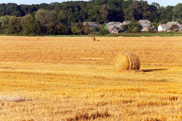 Солома складывается в штабель после уборки урожая пшеницы
