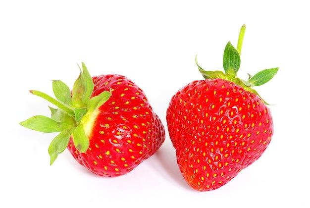화이트 이상 격리 딸기