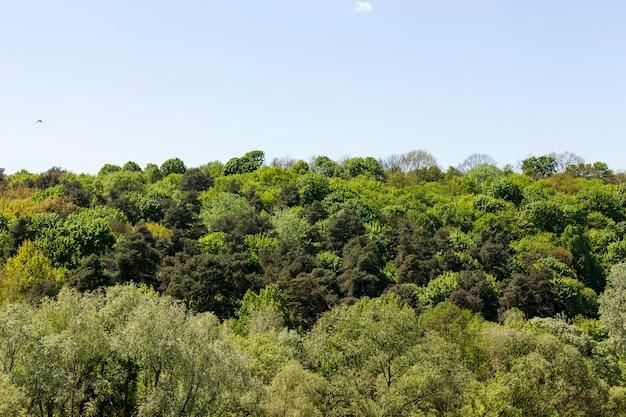 낙엽수가 섞인 숲 근처의 여름 풍경은 자연의 아름다운 특징입니다