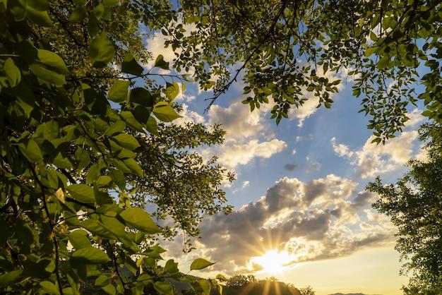 태양은 녹색 잎으로 둘러싸인 일몰의 구름을 강조 표시합니다. 크림. 초반쿨레.