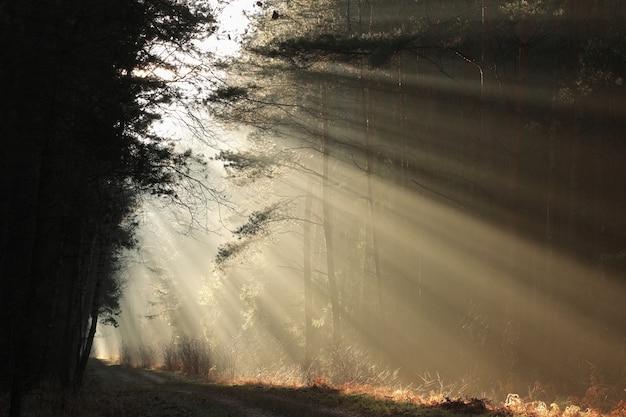 안개가 자욱한 12 월 아침에 태양 광선이 숲길을 비 춥니 다.