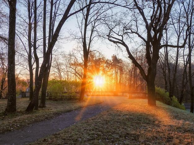 朝の公園の太陽光線。ソフトフォーカス。ガッチナ、ロシア。