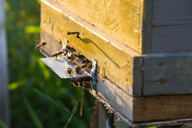 古い蜂の巣の入り口に太陽が輝いています。クローズアップしてください。ミツバチは植物の受粉を始める準備ができています。