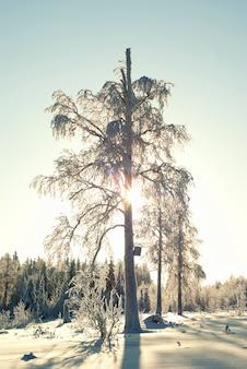 凍るような日に雪に覆われた冬の森の枝を通して太陽がフレームに輝きます