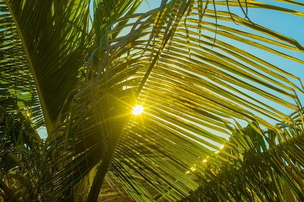 ヤシの木の枝から日差しが差し込む