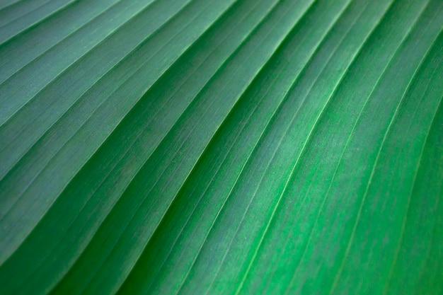 大きな縞模様のシートの表面。緑の背景と壁紙。成長テクスチャ