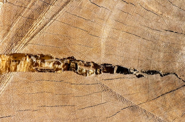 얕은 초점에서 자연 배경을 위한 오래된 금이 간 나무의 표면