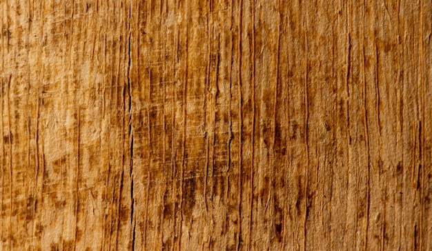 얕은 초점에서 자연 배경을 위한 오래된 나무의 표면