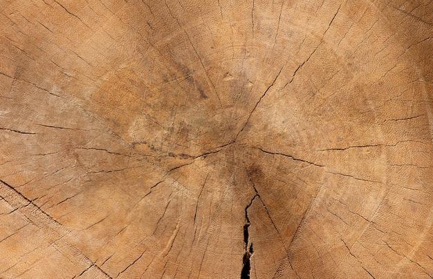 자연 배경을 위한 오래된 나무의 표면