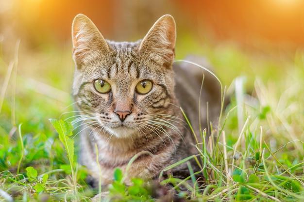 얼룩 고양이가 풀밭에 누워 있습니다.