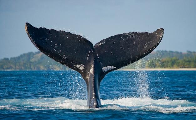 혹등 고래의 꼬리. 마다가스카르. 세인트 메리 섬.