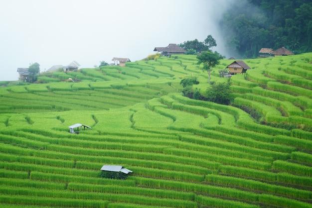 Рисовые поля с террасами в деревне бонг пианг, чиангмай, таиланд