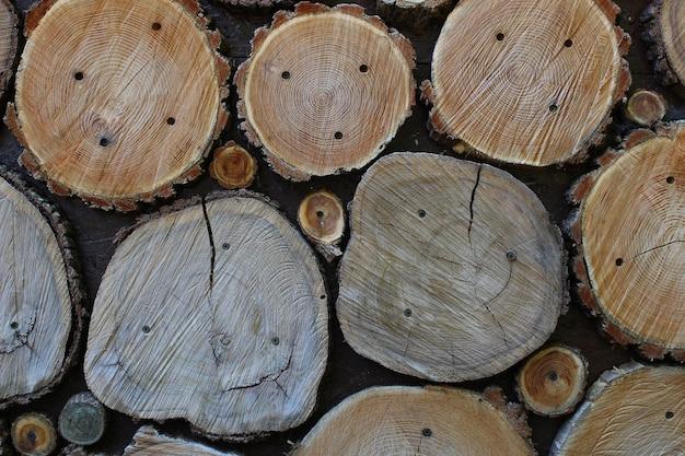 Текстура - срез дерева крупным планом.