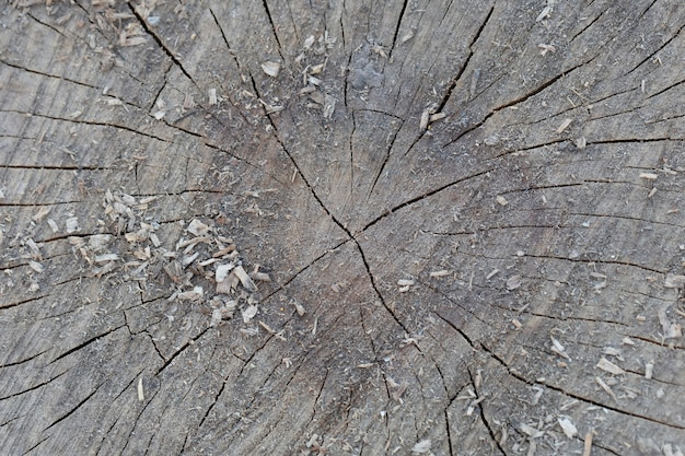 Текстура старого отрезанного пня с расщелинами.