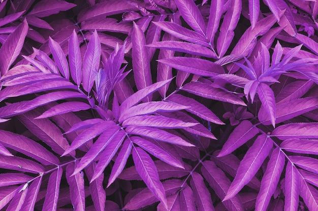 Текстура красивых листьев растения окрашена в голубые и пурпурно-розовые тона.