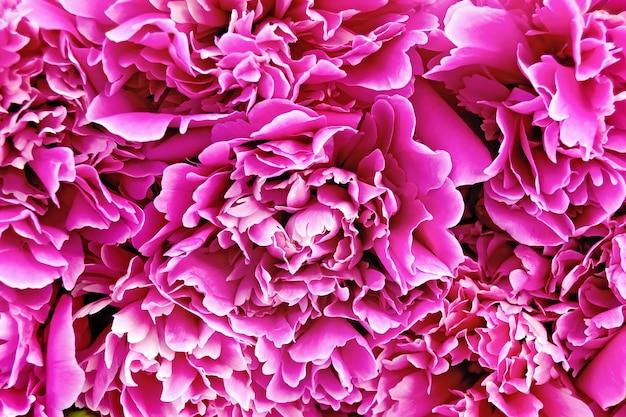 Текстура лепестков ярко-розового пиона