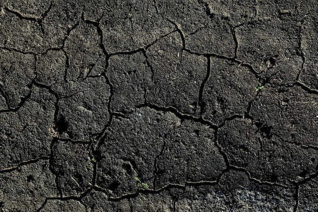 Текстура потрескавшейся земли с небольшими веточками травы. чернозем - плодородная земля.