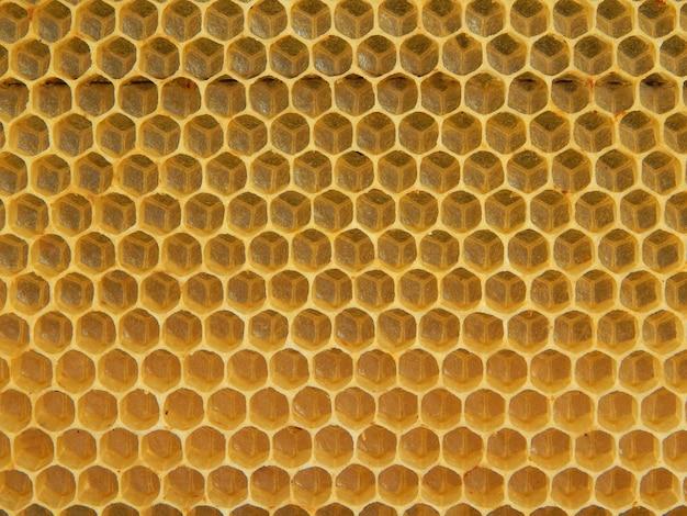 Текстура пустых восковых сот, построенных пчелами. вид сверху.