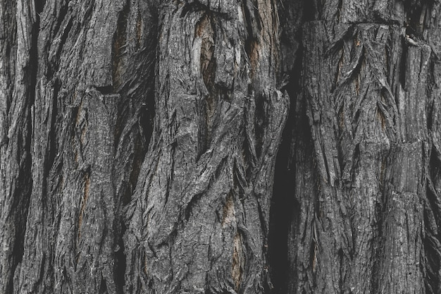 Текстура коры старого дерева, фон объемной структуры дерева.