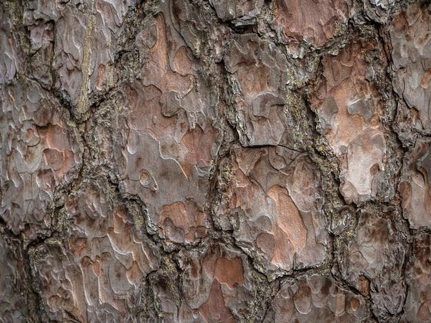 木の樹皮のテクスチャ。松の樹皮の背景。