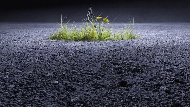 생태학의 주제, 식물은 아스팔트 3d 렌더링에서 자랍니다. 프리미엄 사진