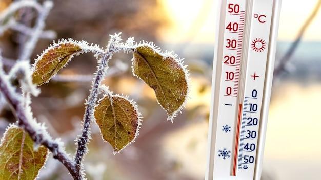 霜に覆われた葉の枝の近くの温度計はマイナス5度を示しています、冬の天気