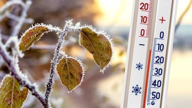 霜で覆われた葉のある木の枝の背景にある温度計は、マイナス10度の温度を示しています